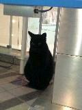 有楽町駅前の黒が行方不明になりました