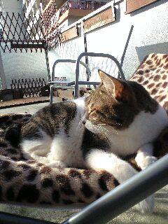 お姉ちゃんの毛布の上で日光浴