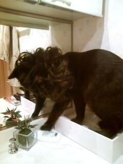ネコにたてがみをつけてもライオンには見えない
