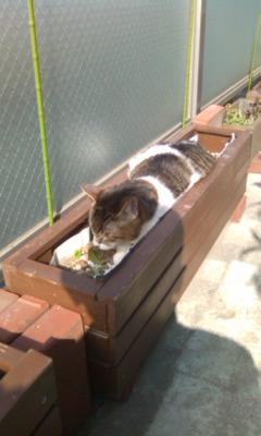 植木鉢からネコが生えました
